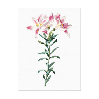 Botanical PREMIUM QUALITY print of lilies