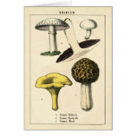 Botanical Print - British Mushrooms & Fungi Greeting Card