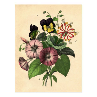 Botanical Print - Pansy & Honeysuckle Postcard
