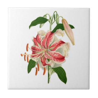 Botanical Print Red Tiger Lily lancifolium rubrum Tile