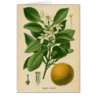 Botanical Print - Sweet Orange Card