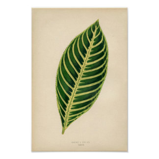 Botanical Print - Tropical Leaf
