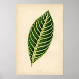 Botanical Print - Tropical Leaf