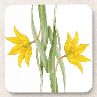 Botanical Tulip Flower Floral Coaster