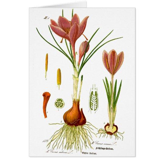 Botany Illustration Card
