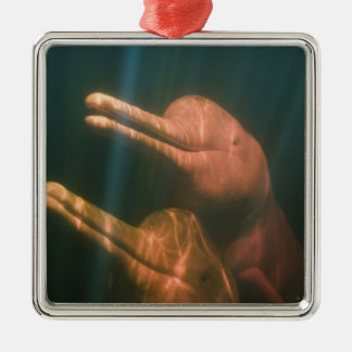 Boto, or Amazon River Dolphin (Inia geoffrensis) Christmas Ornament