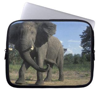 Botswana, Chobe National Park, Aggressive Bull Laptop Sleeve