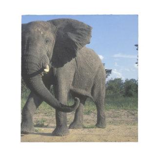 Botswana, Chobe National Park, Aggressive Bull Notepad
