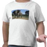 Botswana, Chobe National Park, Aggressive Bull Tee Shirt