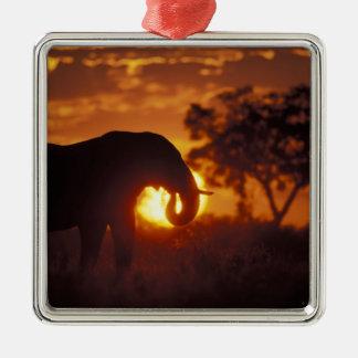 Botswana, Chobe National Park, Bull Elephant Christmas Ornament