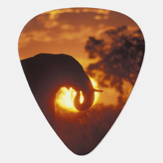 Botswana, Chobe National Park, Bull Elephant Guitar Pick