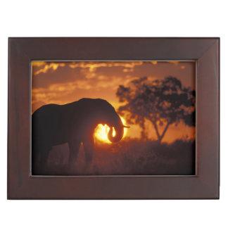 Botswana, Chobe National Park, Bull Elephant Keepsake Box