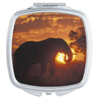 Botswana, Chobe National Park, Bull Elephant Vanity Mirror