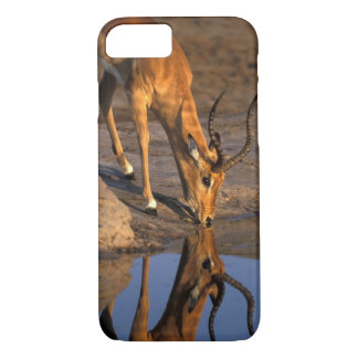 Botswana, Chobe National Park, Bull Impala iPhone 8/7 Case