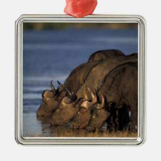 Botswana, Chobe National Park, Cape Buffalo Christmas Ornament