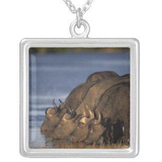 Botswana, Chobe National Park, Cape Buffalo Silver Plated Necklace