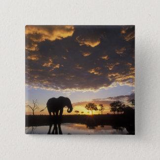 Botswana, Chobe National Park, Elephant 15 Cm Square Badge