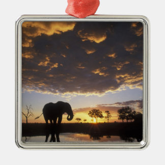 Botswana, Chobe National Park, Elephant Christmas Ornament