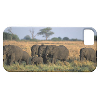 Botswana, Chobe National Park, Elephant herd Barely There iPhone 5 Case