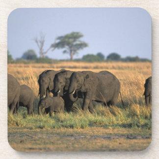 Botswana, Chobe National Park, Elephant herd Coaster