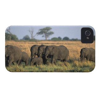 Botswana, Chobe National Park, Elephant herd iPhone 4 Case-Mate Case