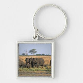 Botswana, Chobe National Park, Elephant herd Key Ring