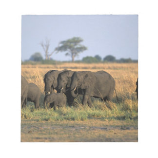 Botswana, Chobe National Park, Elephant herd Notepad