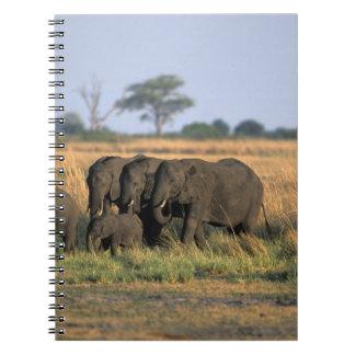 Botswana, Chobe National Park, Elephant herd Spiral Notebook
