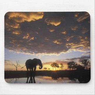Botswana, Chobe National Park, Elephant Mouse Mat