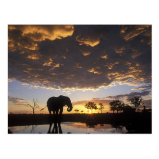 Botswana, Chobe National Park, Elephant Postcard