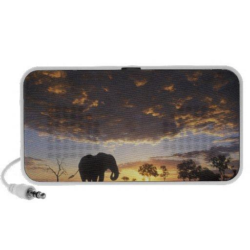 Botswana, Chobe National Park, Elephant Travelling Speaker