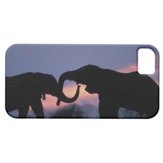 Botswana, Chobe National Park, Elephants Case For The iPhone 5