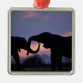 Botswana, Chobe National Park, Elephants Christmas Ornament