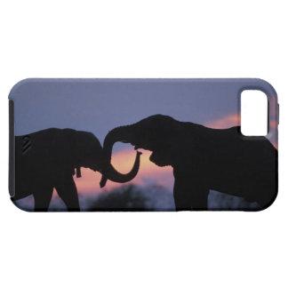 Botswana, Chobe National Park, Elephants iPhone 5 Case