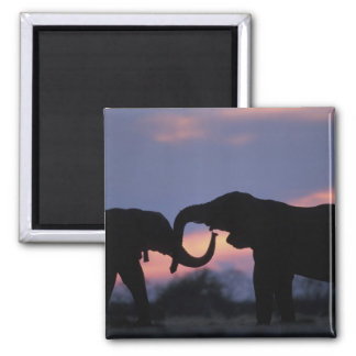 Botswana, Chobe National Park, Elephants Magnet