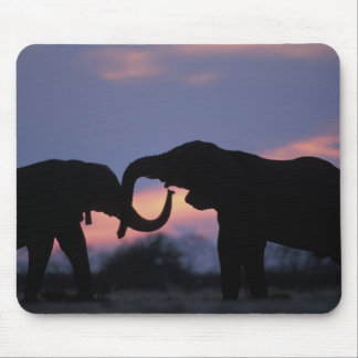 Botswana, Chobe National Park, Elephants Mouse Mat