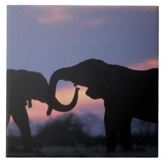 Botswana, Chobe National Park, Elephants Tile