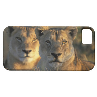 Botswana, Chobe National Park, Lionesses Barely There iPhone 5 Case