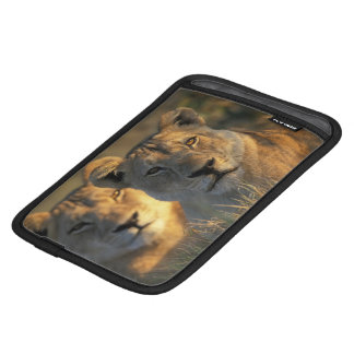 Botswana, Chobe National Park, Lionesses iPad Mini Sleeve
