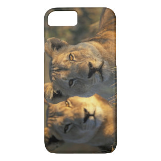 Botswana, Chobe National Park, Lionesses iPhone 8/7 Case