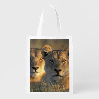 Botswana, Chobe National Park, Lionesses Reusable Grocery Bag