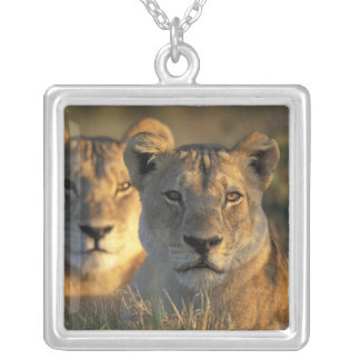 Botswana, Chobe National Park, Lionesses Silver Plated Necklace