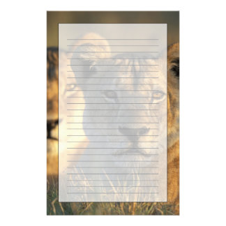 Botswana, Chobe National Park, Lionesses Stationery