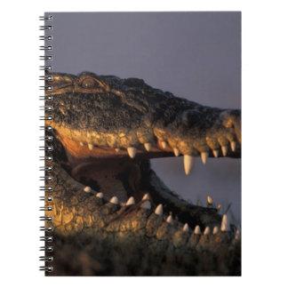 Botswana, Chobe National Park, Nile Crocodile Notebook