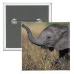 Botswana, Chobe National Park, Young Elephant