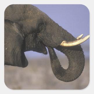 Botswana, Moremi Game Reserve, Bull Elephant Square Sticker