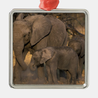 Botswana, Moremi Game Reserve, Elephant herd Christmas Ornament