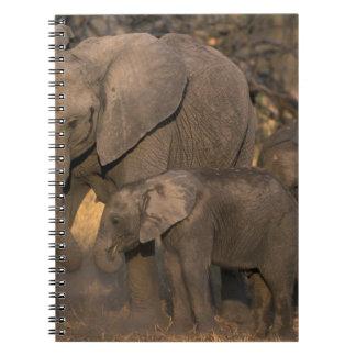 Botswana, Moremi Game Reserve, Elephant herd Notebook