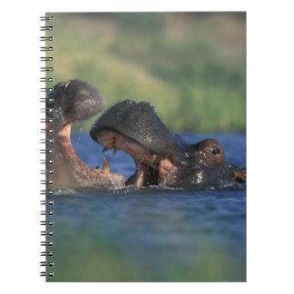 Botswana, Moremi Game Reserve, Hippopotami Notebook