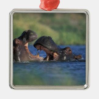 Botswana, Moremi Game Reserve, Hippopotami Silver-Colored Square Decoration